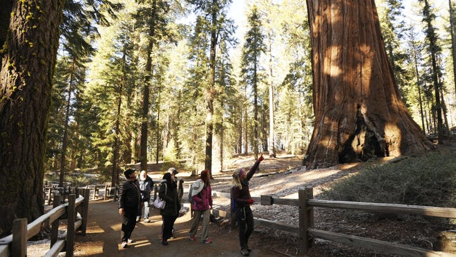 In this archive photo, a group in Sequoia National Forest visits the General Grant Tree Trail on a guided walk.