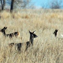 Outdoors: Turns out deer season isn't over