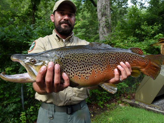 More than 100k trout fishermen spent trout for Tennessee trout fishing