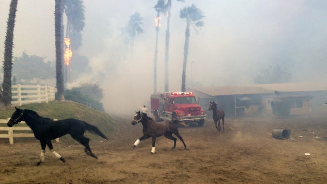 Terrified horses run from San Luis Rey Downs as the Lilac Fire sweeps through the horse-training facility back in December.