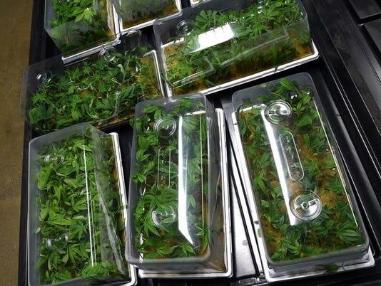 635744682721965290-Seedlings-2