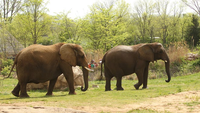 Nashville Zoo's elephants have retired in Hohenwald. The zoo plans to renovate and expand its elephant exhibition.