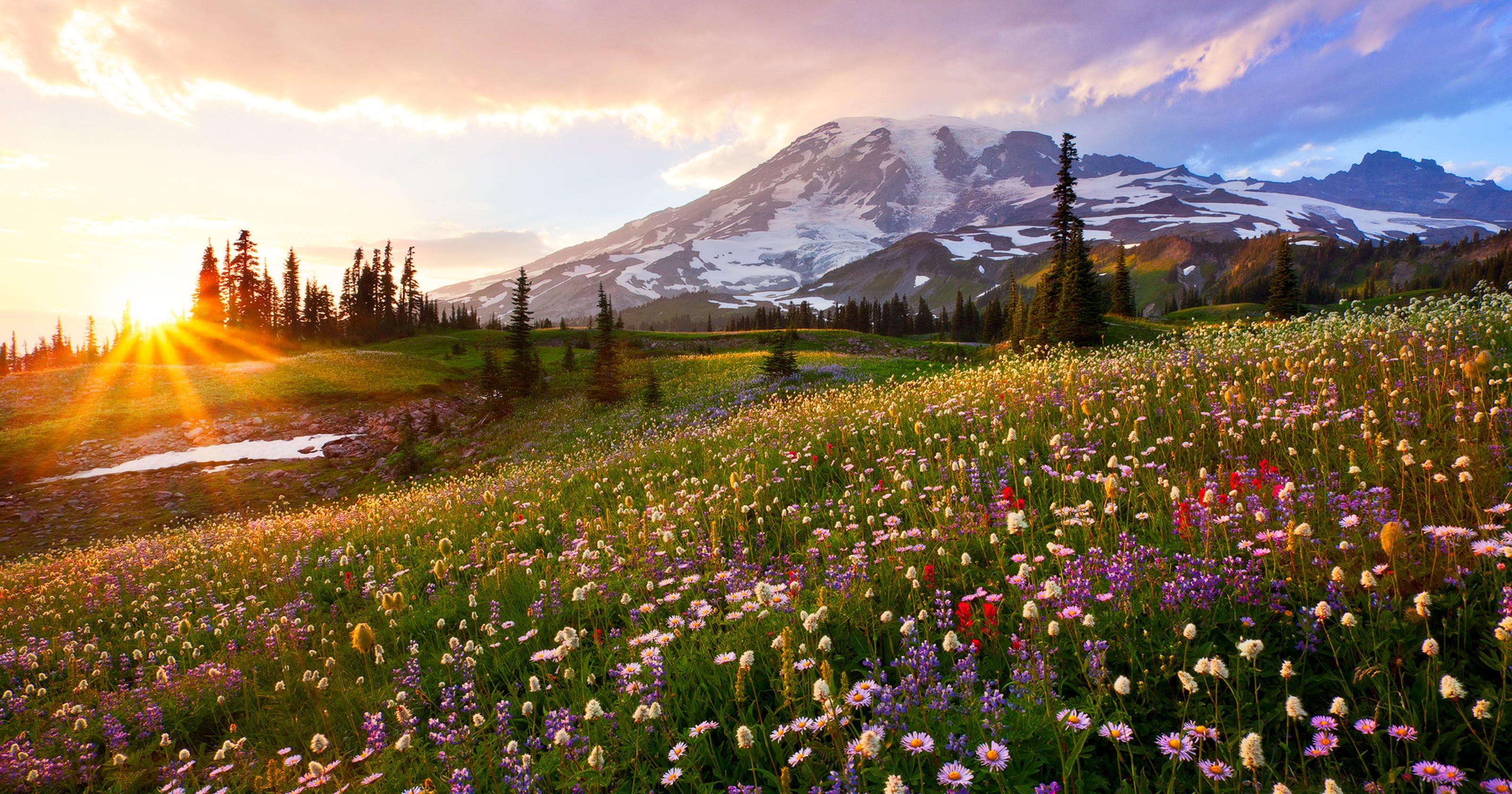 Mount Rainier National Park: Over 230,000 acres of natural beauty