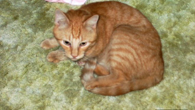 T2 in 2002, the year Perry Martin, of Fort Pierce, found him as a stray in his neighborhood.