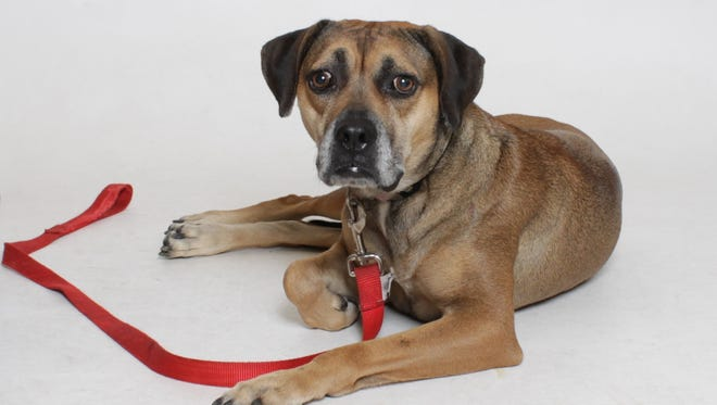 Cora-May, once a withdrawn and shy pup, is coming around with the love and support of her foster family. She awaits her forever family and home.