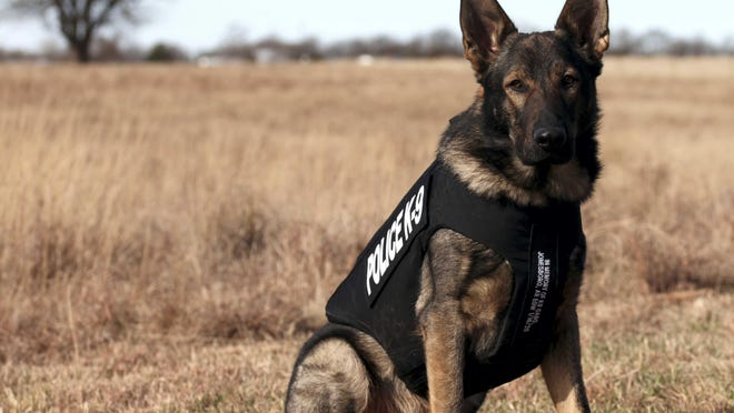 Officer K9 Haxo of Butler Community College's Department of Public Safety has received a bullet and stab protective vest, thanks to a charitable donation from non-profit organization Vested Interest in K9s, Inc.