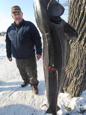 Don Feldner of Fond du Lac spears a 148-pound sturgeon and 74.6 in length on Sunday, Feb. 9, 2014. Feldner registered the large fish at Jim and Linda's in Pipe.