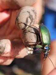 """A volunteer holds a beetle during filming of """"Outdoor"""