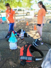 Annah Nieman (right) and Kendall Anderson (left), both Clemson University, train Carbon, a black labrador retriever from Miracle Paws in Anderson.
