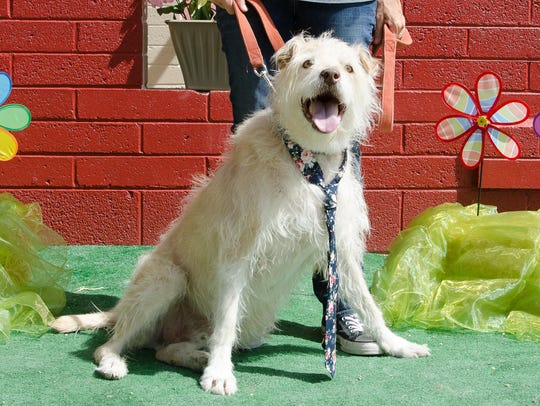 Kobuk is available for adoption at Home Fur Good, 10220