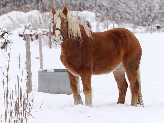Horse in Williston.