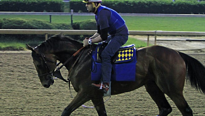 Exercise rider Jorge Alvarez jogs Kentucky Derby winner American Pharoah the wrong way around the track at Churchill Downs in Louisville, Ky., Thursday, May 7, 2015. American Pharoah is training at Churchill Downs before heading to Baltimore for The Preakness Stakes next week.