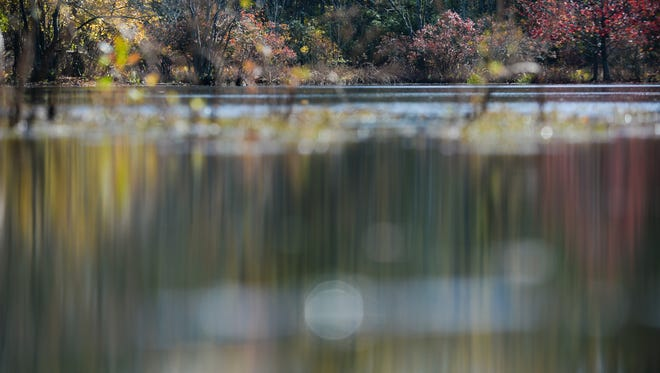 Fall leaves reflected in a pond at the Great Cypress Swamp.