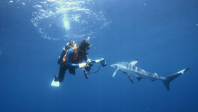 An ocean researcher studies a shark, a big fish that could be facing extinction as oceans warm.