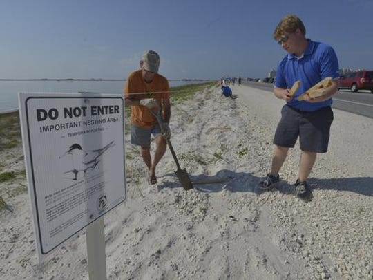 Volunteers erect a barrier to protect a turtle nest in Navarre.
