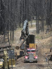 Rim Fire Recovery