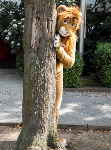 A delegate dressed in a furry Lion costume peeks out from behind a tree outside the convention centre at the Eurofurence convention in Berlin on Thursday. Some 2700 delegates are taking part in the 3-day-long Eurofurence.