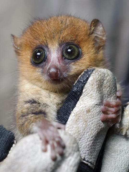 DFP island of lemurs.JPG