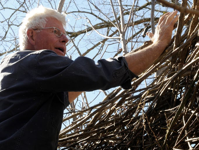 Patrick Dougherty, Cheekwood's 2014 artist in residence, checks on one of the roof walls of his art installation, called Stickworks, a series of huts built out of sticks and branches at Cheekwood Botanical Gardens on Thursday March 13, 2014 in Nashville, Tenn.