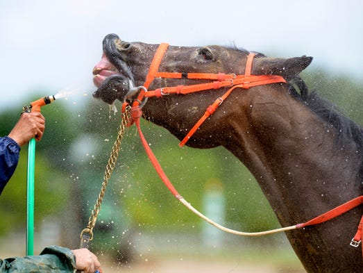 A horse gets a bath after a race at Pimlico Race Course on Friday.