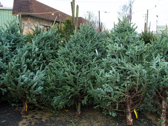 Fresh cut Christmas tree's for sale at Snavely's Garden Corner. The Christmas trees cost between $32-$89.