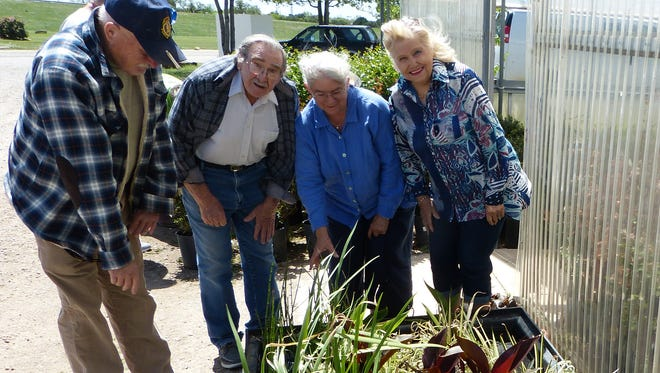 Texoma Water Garden Society members Richard Dalton, Frank Dannelley, Mary Rhoads and Sallie Dannelley examine the bog plants at Smith's Gardentown, site of the group's meeting April 27.