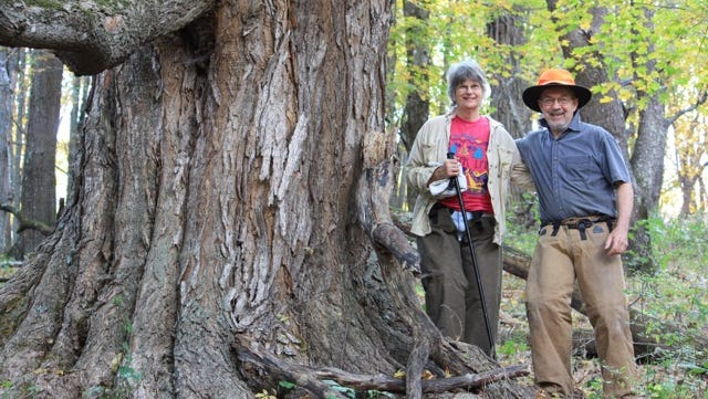 Lynn and Bill Limpert pose for a photo next to a 12.2-foot circumference sugar maple, which they estimate to be 300 years old. They believe it would be the first tree to be cut on their Bath County, Va., property should the Atlantic Coast Pipeline be approved and follow its projected route through their land.