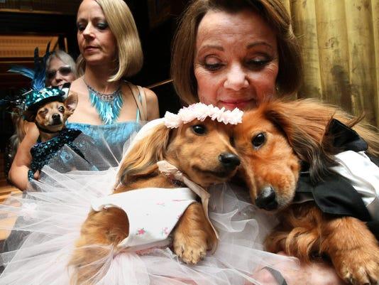 AP Pets canine weddi (2).JPG