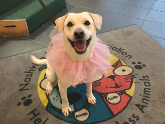 Snow White loves dressing up in tutus and bandanas.