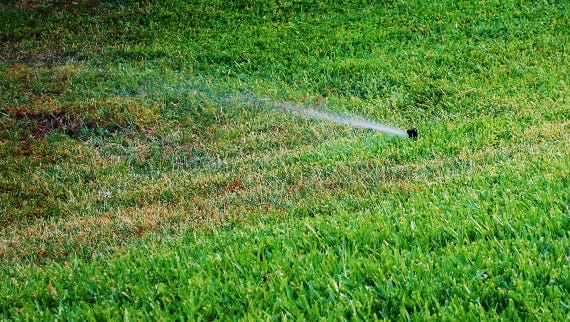 Now is the time to check out irrigation systems for proper run times, broken or missing heads and working rain switches. Be sure to adjust the days the irrigation runs to comply with local or Water Management District regulations.