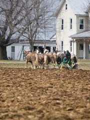 An Amish farmer in Narvon, Pa., plows his field with