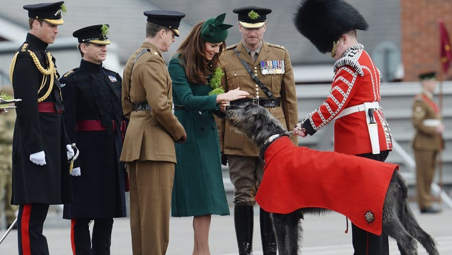As Prince William (far left) looks on, Duchess Kate gives shamrocks to Domhnall, the Irish wolfhound mascot of the Irish Guards during St.Patrick's Day parade for the regiment in Hampshire on March 17.