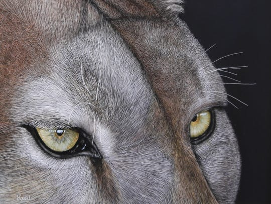"""Cougar Eyes"" by Sue Kroll is on display at the Arrowhead"