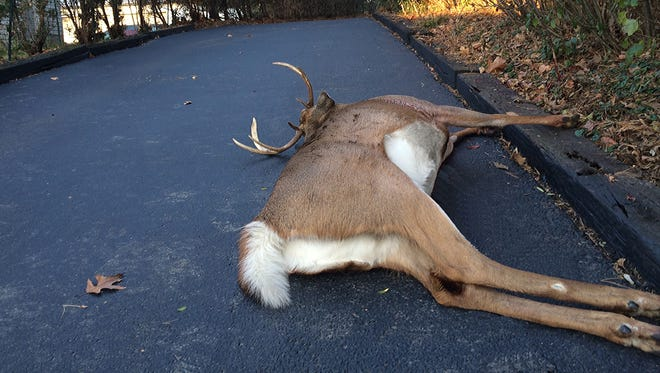 Patrick and Penny Durkin found this bow-killed buck in their driveway before dawn Nov. 2. A grateful neighbor soon retrieved it.