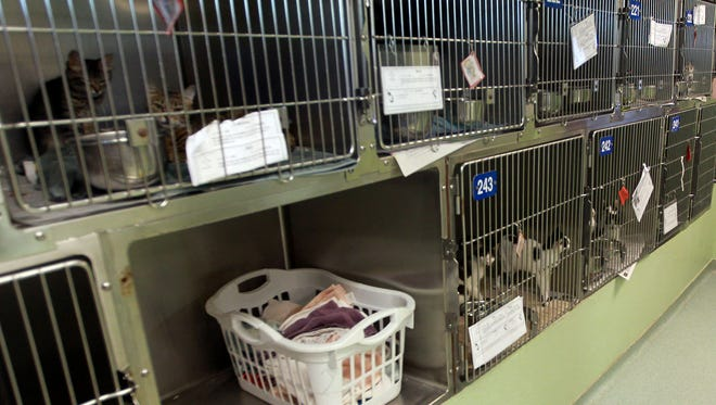 Tallahassee Animal Services Center shown here in 2013.