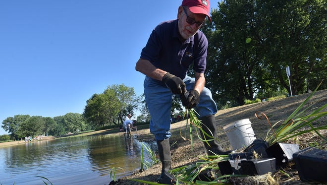 Rod Schlise of Sturgeon Bay was among a couple dozen volunteers planting native water/bog plants around the perimeter of an area surrounding Little Lake inside Sunset Park in Sturgeon Bay in July, 2016. The restoration of the lake is a cooperative project of the Rotary Club of Sturgeon Bay.