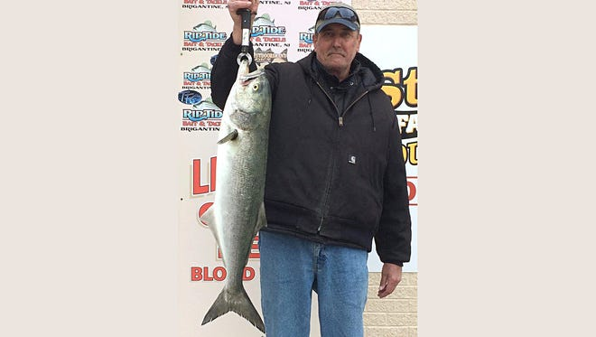Carl Polus with a big bluefish he caught in Brigantine using finger mullet.