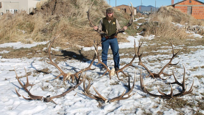 Game Warden Shawn Briggs stands with elk antlers and heads seized during an investigation of James and William Page. The Pages are charged with multiple felonies and misdemeanors on accusations of trespassing to poach the elk, with seven of the eight bulls meeting trophy standards for felony charges.