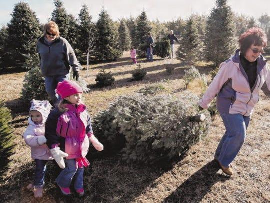 Choosing a Christmas tree is a family affair.