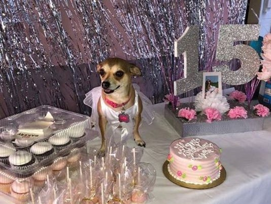 636688021842063460-dog-at-quince.JPG