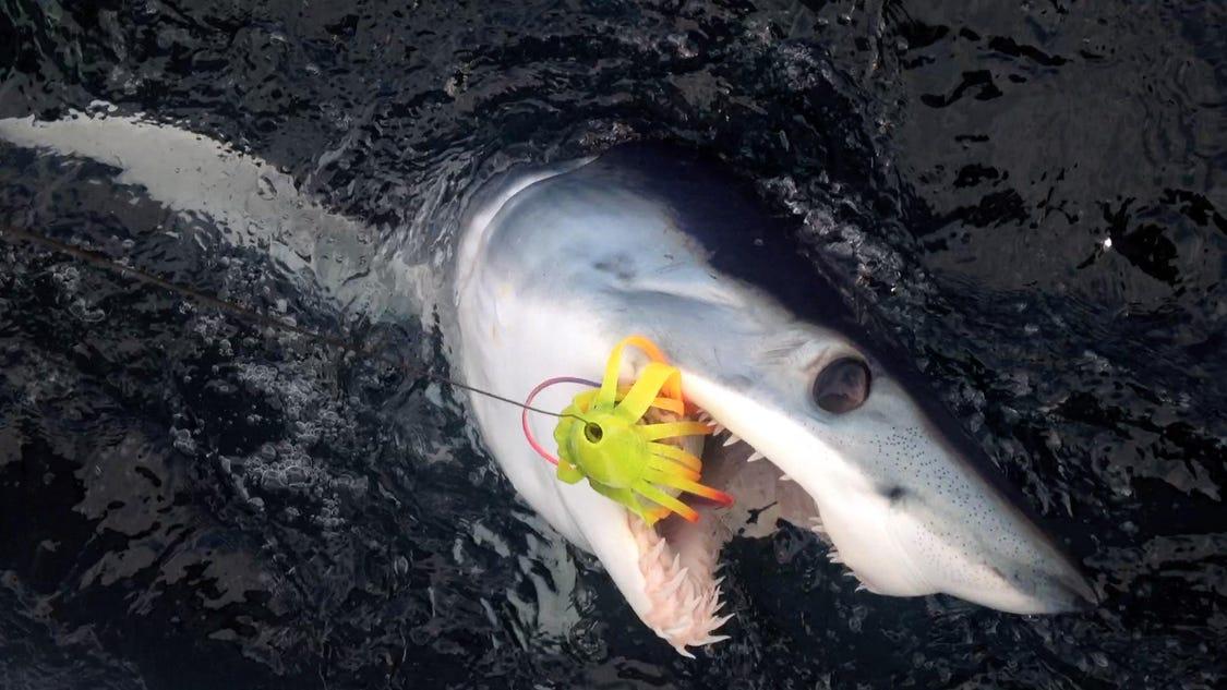 Mako sharks caught off new jersey coast for Shark fishing nj