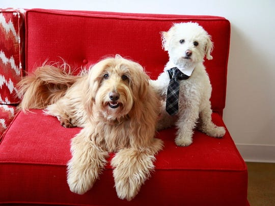 DogVacay is like Airbnb for your dogs.
