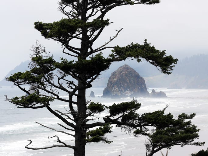 Cannon Beach's Tolovana Park and its view of Haystack Rock make for one of the classic Oregon scenes. Here the rock is framed by a sitka spruce.