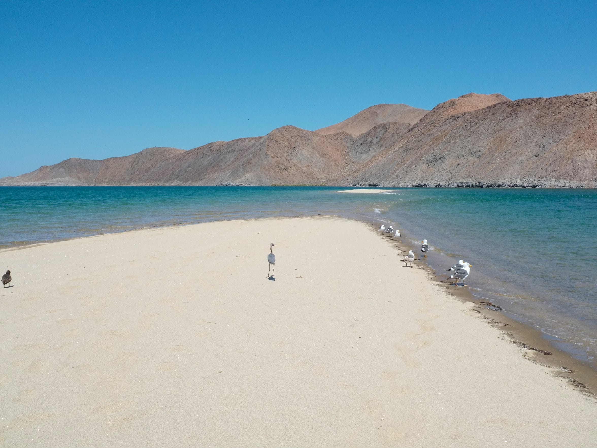 High tide at Bahia Gonzaga carves out a private sand peninsula, perfect for relaxing with a cerveza.