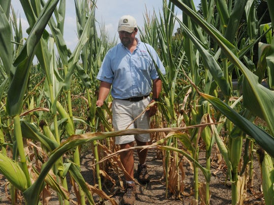 Charles Wright IV of Mardela Springs walks through a portion of his corn field in this 2009 file photo.