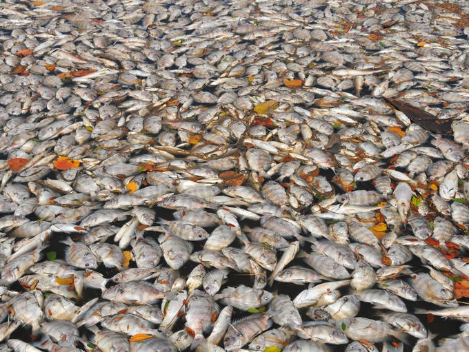 What started as reports of a fish kill of a few hundred