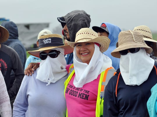 Gloria Mejia, center, has worked for Tanimura & Antle 24 years. Her friends on the crew Thursday will wear full sun protection all day.
