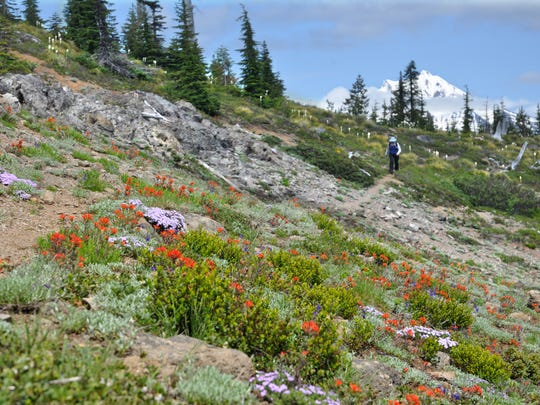 Paintbrush blooms line a Bachelor Mountain trail with Mount Jefferson in the background.