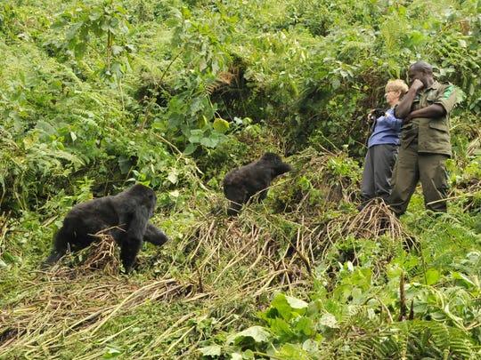 Jeanne Hann and a porter watch juvenile gorillas play.