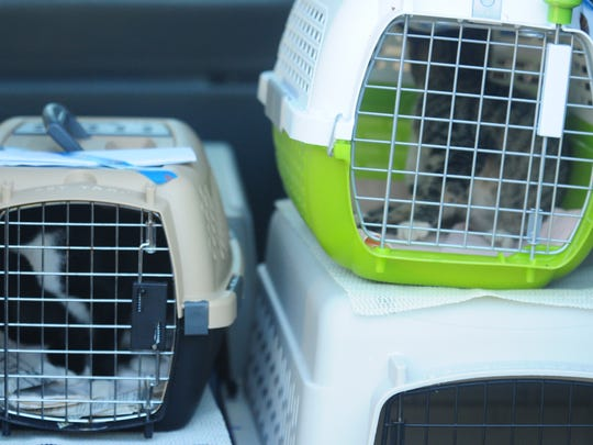 Cats bound for Waldorf, Maryland, where they will be sent to Petsmarts for adoption.